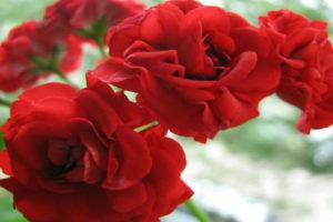 Этот цветок — настоящая находка для вашего дома! И вот почему..