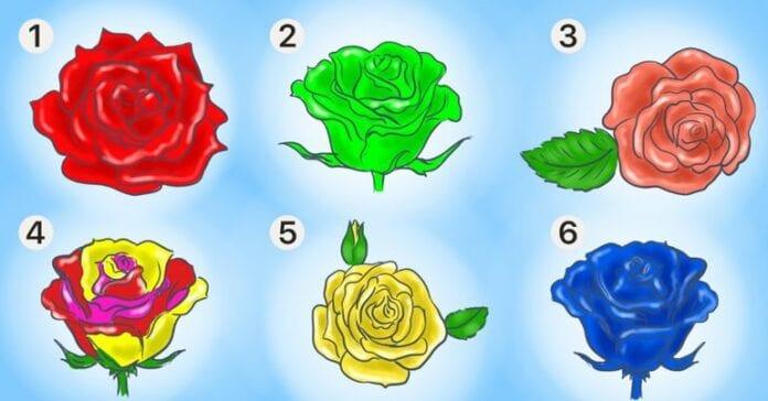 Выберите розу — и мы расскажем, что хорошего есть в вашей личности