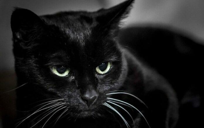 Удивительный рассказ: «Вставная челюсть кота Маркиза»